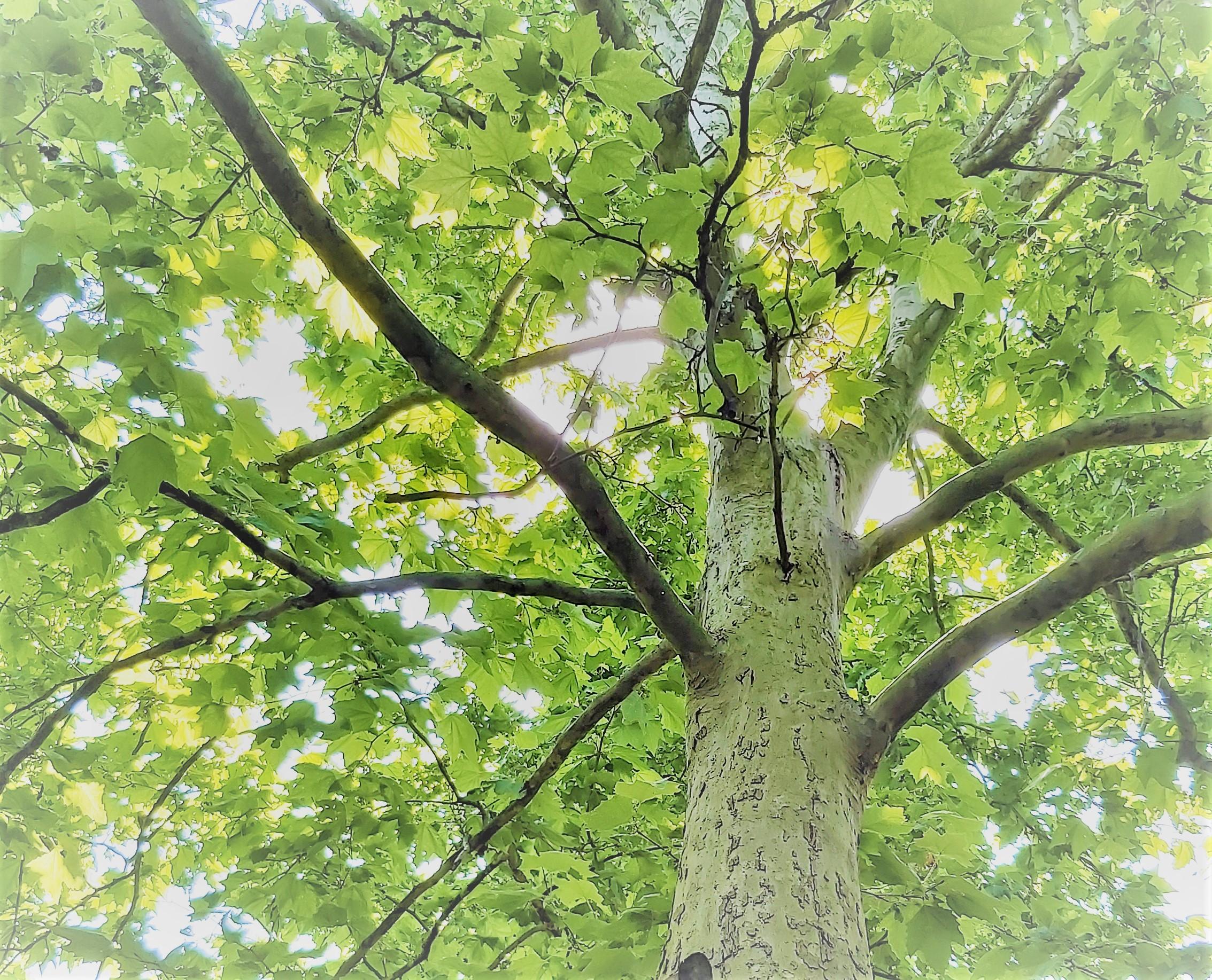 Félútig a fákért
